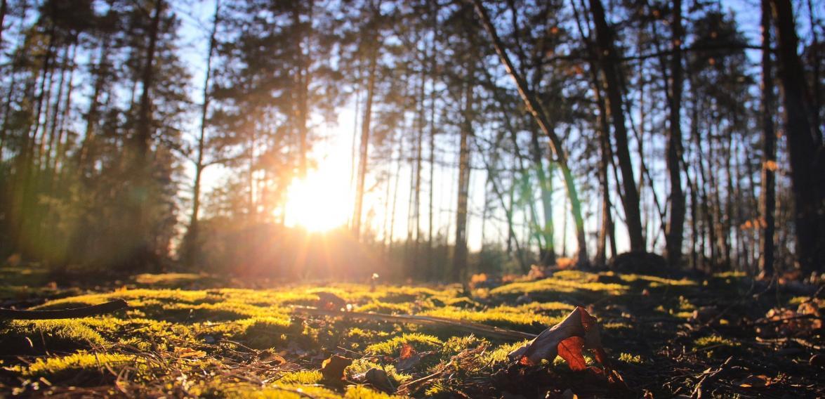 Лес возле Мощун