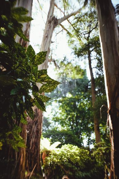 Национальный парк Данденонг Рейнджес (Dandenong Ranges National Park)