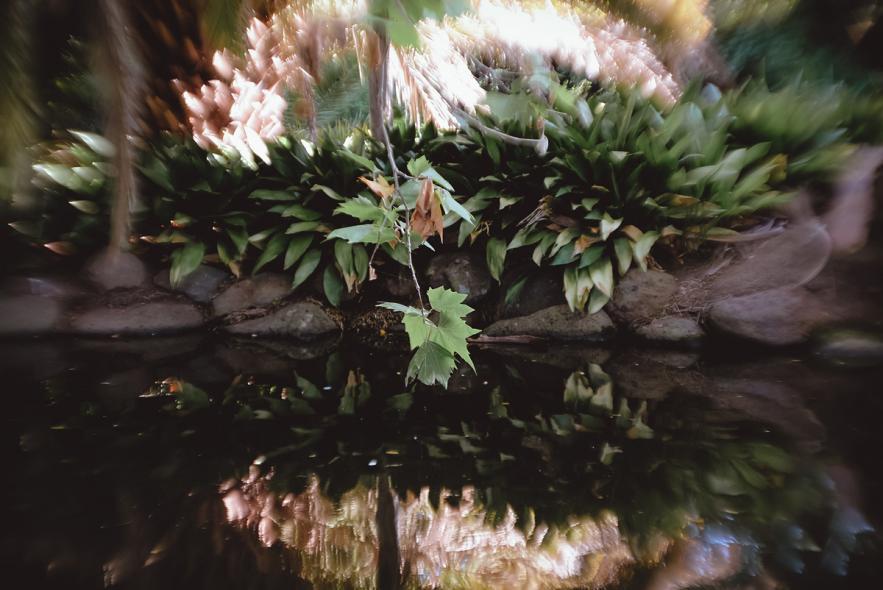 Сады Королевы Виктории (Queen Victoria Gardens)
