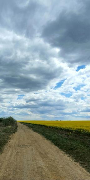 Дорога между лиманом и полем