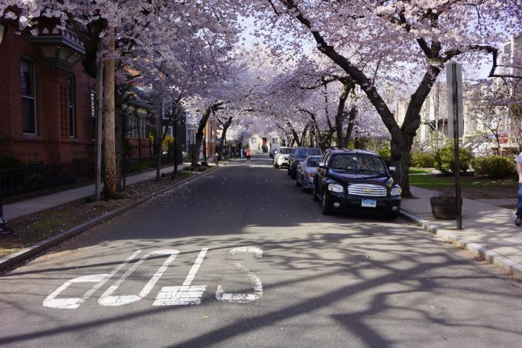 Вустер Сквер во время цветения сакур