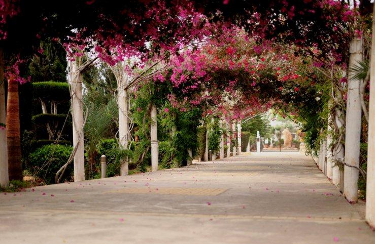 Галерея цветочных арок