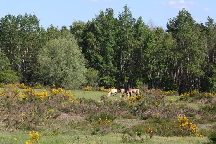 Парк дикой природы