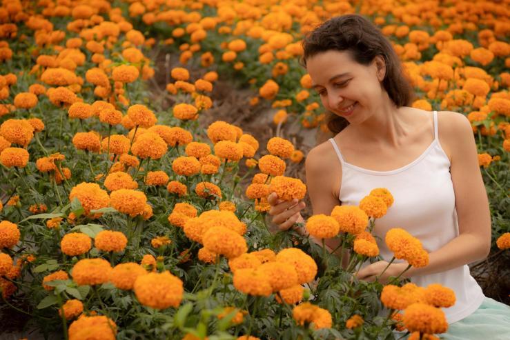 Marigold Fields - Поля с бархотками